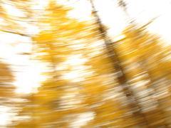 Golden background 4 - stock photo