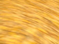 Golden background 2 Stock Photos