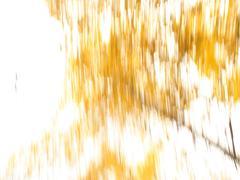 Golden background 7 - stock photo