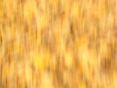 Golden background. Stock Photos