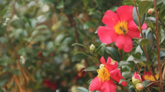 Flower and Yellow Jackets Stock Footage
