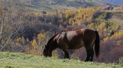 Autumn scenery, single horse feeding on autumn hill Stock Footage