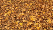Stock Video Footage of Fallen leaves