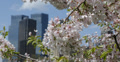 Ultra HD 4K Central Park New York City Skyscrapers Cherry Trees Blossom Flowers Footage