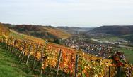 Stock Photo of autumn vineyard scenery