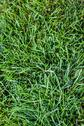 Stock Photo of intense grass