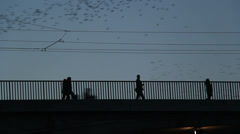 Thousands of starlings fly 28 - stock footage