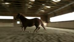 Horse galloping in riding hall Stock Footage