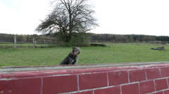 Dog jumping over balk Stock Footage