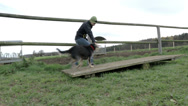 Stock Video Footage of dog agility