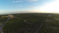 Top view of orange tree field Stock Footage