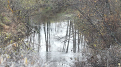 Autumn creek Stock Footage