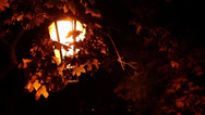 Stock Video Footage of Street Lantern With Autumn Leaves Around 30p