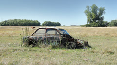Car Wreck and Calf Grazing Stock Footage