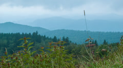 Summertime on the Blue Ridge Parkway with Wild Flowers Stock Footage