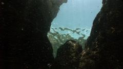 Underwater rocks Stock Footage