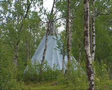 Lavvu, canvas tent or tipi in birch forest, North Sweden Stock Footage