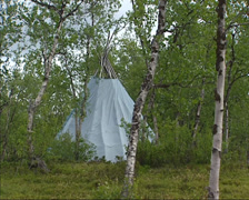 Lavvu in birch forest, North Sweden, a temporary dwelling or canvas tent Stock Footage