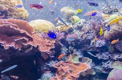 Tropical aquarium, national museum of natural history, washington dc Stock Photos