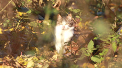 Stray cat - stock footage