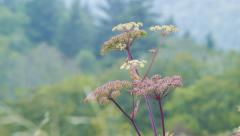 Wild Flowers during the Spring and Summertime in the Blue Ridge Mountains Stock Footage