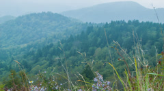 Summer Flowers Blowing in the Wind near Asheville in the Blue Ridge Mountains Stock Footage