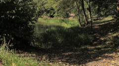 Lake in the forest Stock Footage