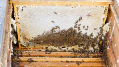 Bees in open beehive Stock Photos