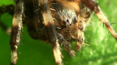 Paws, whiskers and eyes of spider - stock footage