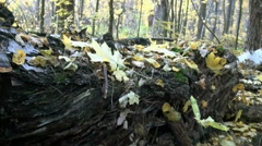Fallen tree trunk and fungus on it Stock Footage