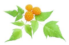 orange salmonberry and leaves - stock photo