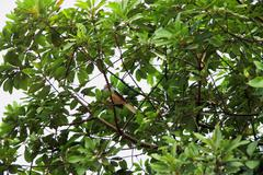 subtropical bird on the branch with green leaves - stock photo