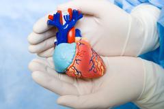 Human heart in doctor's hands Stock Photos