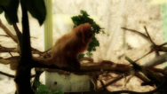 Stock Video Footage of monkeys in captivity in a zoo