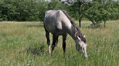 Horse on the pasture Stock Footage