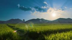 Beautiful Rice Farm In Countryside And The Sun Light Stock Footage