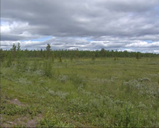 Peatland near Kiruna, Sweden, north of the arctic circle- pan Stock Footage