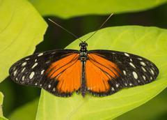 Orange, black and white butterfly Stock Photos
