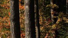 Autumn trees. Stock Footage