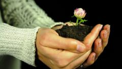 Flower in Hands Green Environment Conservation Concept - stock footage