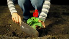Woman Planting Flower Stock Footage