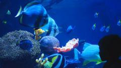 Aquarium Kid Stock Footage