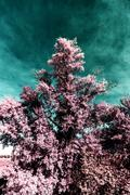 In the park autumn infra red Stock Photos