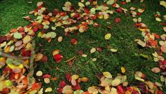 Rake Cleaning green lawn from fallen leaves Stock Footage