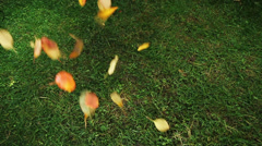 Autumn Leaves Falling On Green Meadow Fall Colors - stock footage