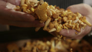 Stock Video Footage of Chanterelle mushrooms
