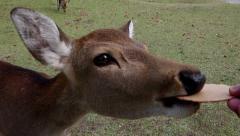 Deer Eating in Nara Park Stock Footage