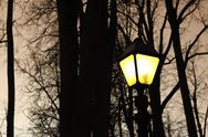Stock Photo of street night light and silhouettes of trees