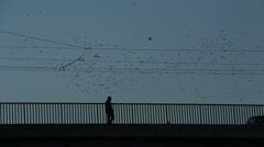 Thousands of starlings fly 37 Stock Footage