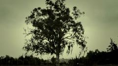 Live tree Stock Footage